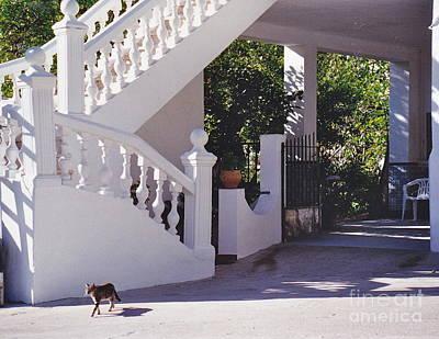 Photograph - Stairway Shadows by Barbara Plattenburg