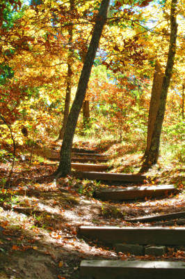 Autumn Peggy Franz Photograph - Stairway To Heaven by Peggy Franz
