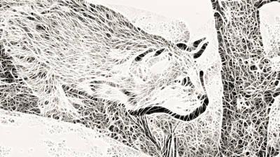 Stalking Art Print by Douglas Barnard