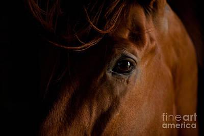 Impressionist Landscapes - Stallion Eye by Terri Cage