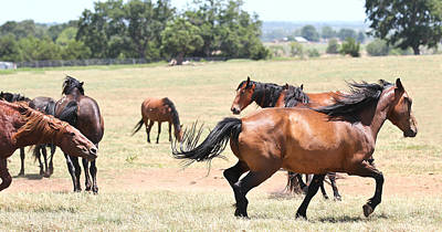 Photograph - Stallion Stand by Elizabeth Hart