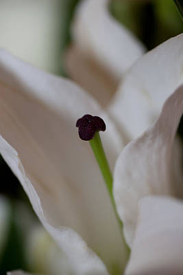 Photograph - Stamen by Carole Hinding
