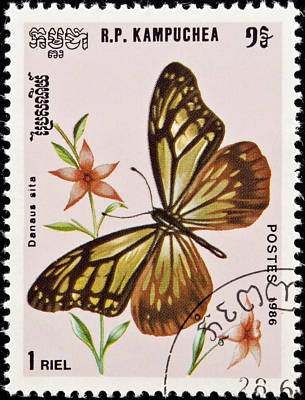 Tropical Stamps Photograph - Stamp. Butterfly And Flower. by Fernando Barozza