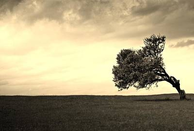 Stand Alone Tree 1 Art Print by Sumit Mehndiratta