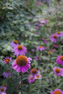 Color Photograph - Stand Out by Lizzie Zoll