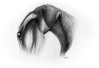 Standard Schnauzer Head Art Print by Katerina A Cechova
