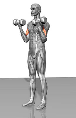 Photograph - Standing Biceps Curl (part 1 Of 2) by MedicalRF.com