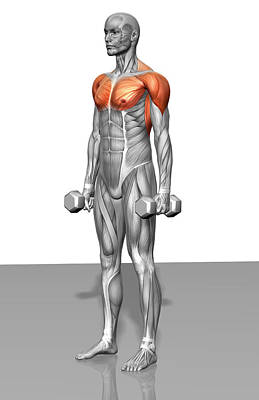 Photograph - Standing Biceps Curl (part 2 Of 2) by MedicalRF.com