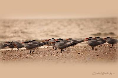 Keewaydin Island Photograph - Standing In Formation by Christine Stonebridge