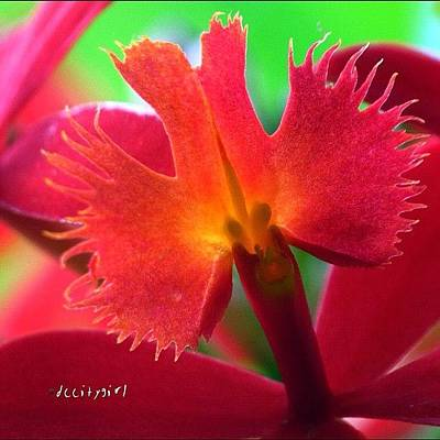 Orchids Photograph - Standing In The Middle Of The Road Is by Dccitygirl WDC