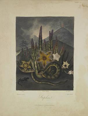 Stapelius Art Print by Robert John Thornton
