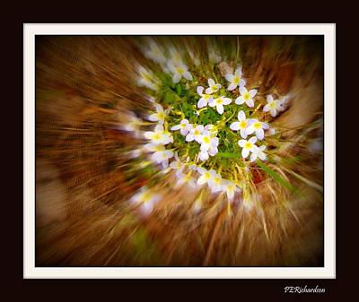 Photograph - Star Burst by Priscilla Richardson