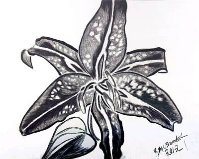Star Gazer Limited Art Print