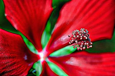 Digital Art - Star Hibiscus by Carrie OBrien Sibley