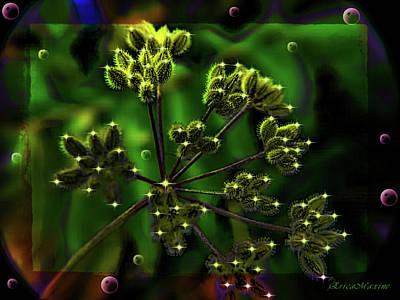Photograph - Star Light Star Bright by Ericamaxine Price