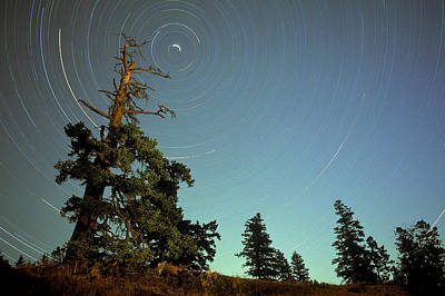 Star Trails, North Star And Old Douglas Art Print by David Nunuk