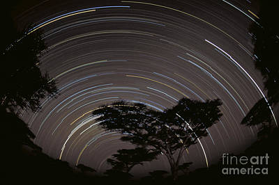 Photograph - Star Trails Over The Southern Serengeti by Greg Dimijian
