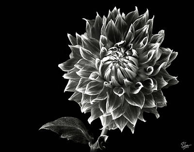 Print featuring the photograph Starburst Dahlia In Black And White by Endre Balogh