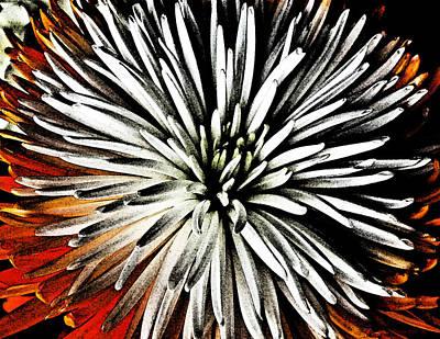Starburst Art Print by Yvonne Scott