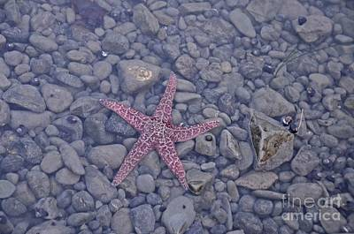 Photograph - Starfish by Cassie Marie Photography