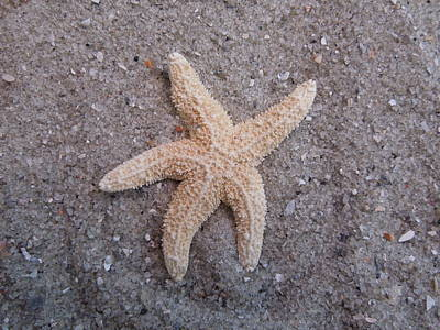 Starfish Art Print by Chad and Stacey Hall