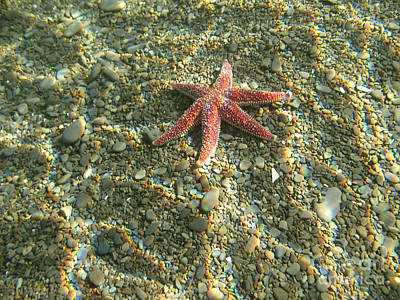 Starfish In Shallow Water Art Print by Ted Kinsman