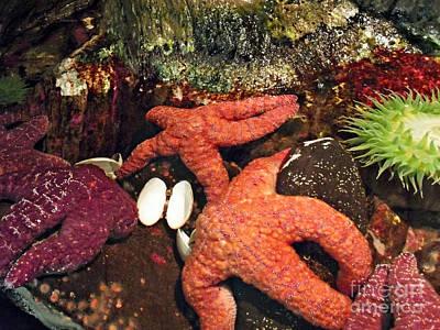 Starfish Medley Art Print
