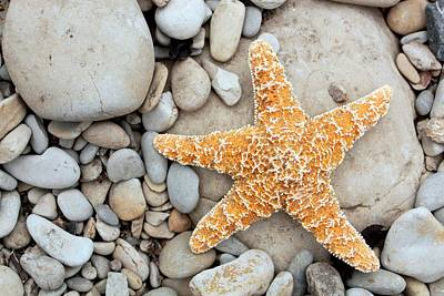 Fish Out Of Water Photograph - Starfish On A Beach by Tony Craddock