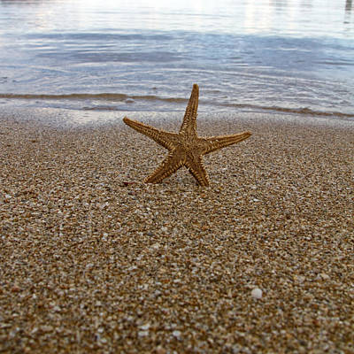 Abstract Beach Landscape Photograph - Starfish by Stelios Kleanthous