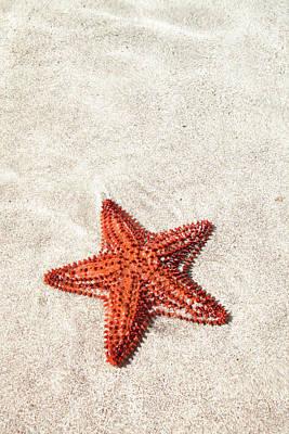 Starfish Photograph - Starfish Under Water by Matteo Colombo