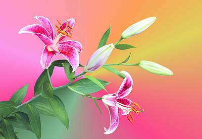 Stargazer Lilies Art Print