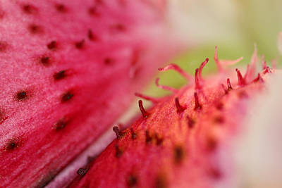 Photograph - Stargazer Lily Detail 2 by Mark J Seefeldt