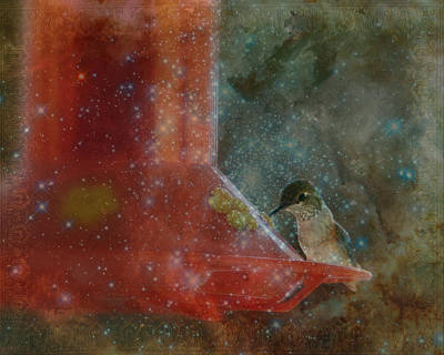Photograph - Stargazing Hummer by Cindy Wright