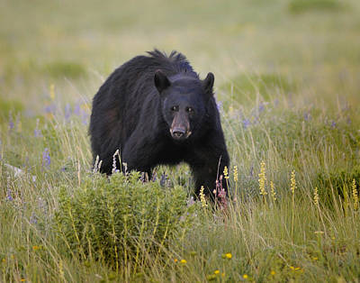Photograph - Staring Me Down by Don Wolf