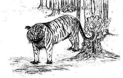 Forest Drawing - Staring Tiger by Mashukur  Rahman