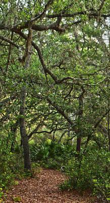 Starkey Photograph - Starkey Woodlands  by Gregory Colvin