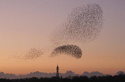 Flock Of Bird Photograph - Starling Display by Lorna Wilson