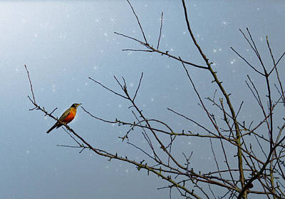 Red Bird Photograph - Starry Night by Rebecca Cozart