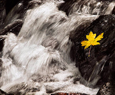 Photograph - Starvation Creek Leaf by Jean Noren