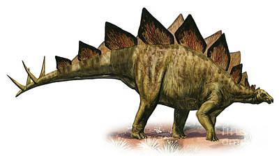 Stegosaurus Digital Art - Stegosaurus Armatus, A Prehistoric Era by Sergey Krasovskiy