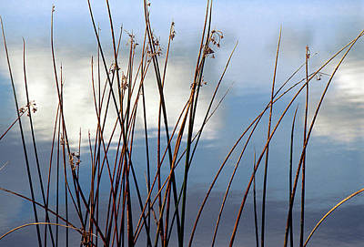 Photograph - Stems Along The Stream by John Brink