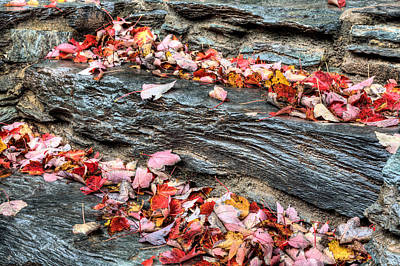Photograph - Stepping Into Autumn by JC Findley