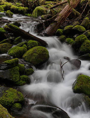 Olympic National Park Photograph - Stepping Stones by Mike Reid