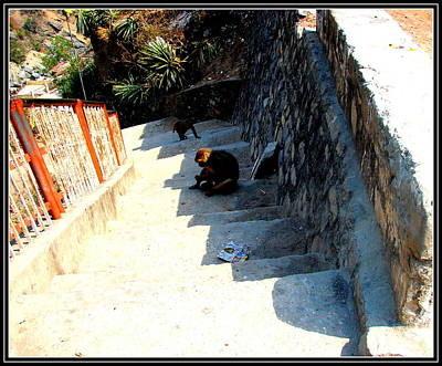 Photograph - Steps And Shadows by Anand Swaroop Manchiraju