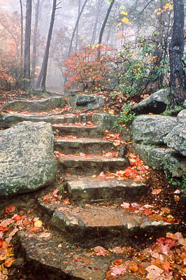 Photograph - Steps Cloudland Canyon by Tom and Pat Cory