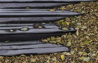Photograph - Steps In Leaves by Michael Canning