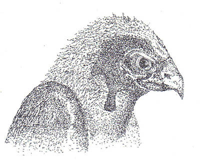 Pointalism Drawing - Sterling's Falcon by Charles Kabrich