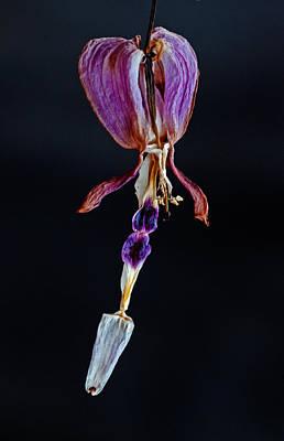 Dried Photograph - Still Bleeding by Danielle Del Prado