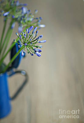 Still Life Royalty-Free and Rights-Managed Images - Still Life 02 by Nailia Schwarz