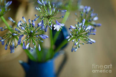 Royalty-Free and Rights-Managed Images - Still Life 03 by Nailia Schwarz